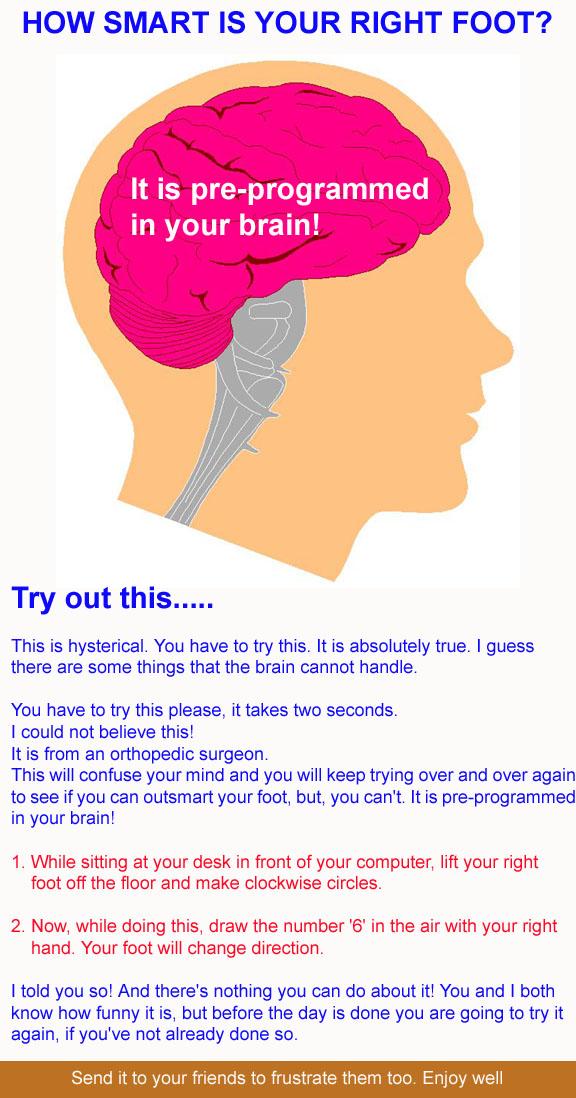 Brain & Foot