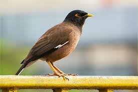 Birds Name in English and Marathi | What I have written I